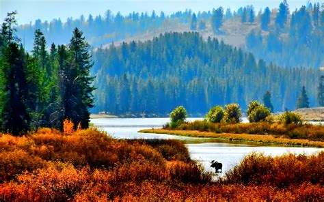 Forest and water - beautiful nature and autumn season