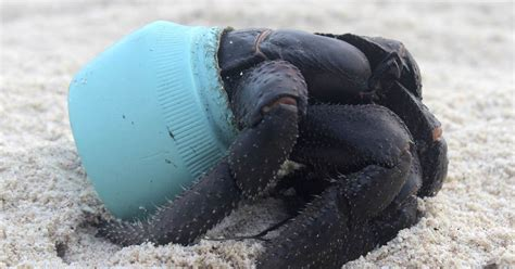 Henderson Island: 38M Pieces of Trash Washed Ashore From