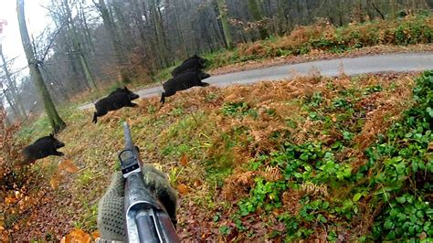 Chasse aux sangliers - Ma plus belle battue !! - YouTube