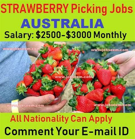 Strawberry Picking Jobs in Australia for Foreigners with