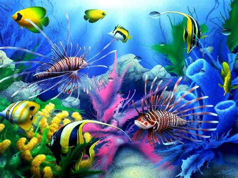Sea Seabed Colorful Tropical Fish, Coral Wallpaper Hd For
